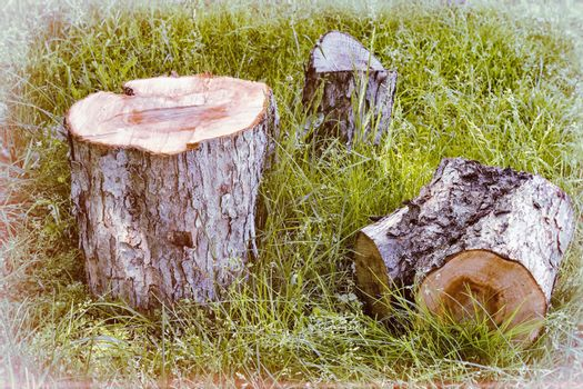 Sawn tree trunk.