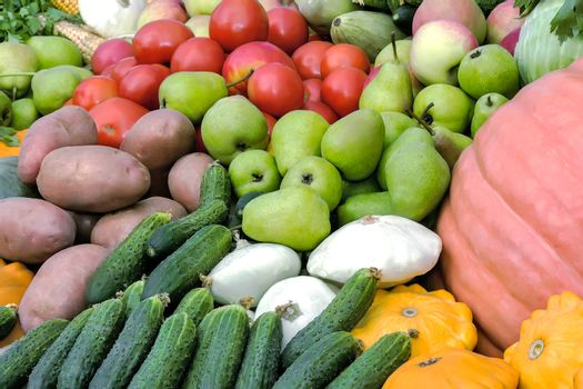 Vegetable harvest is sold at the fair.