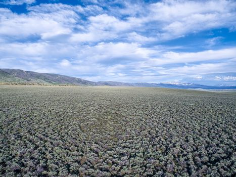 field of sagebrush aerial view - North Park, Colorado at foothills of Medicine Bow Mountains