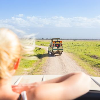 Woman on african wildlife safari observing animals and nature from open roof safari jeep. Rear view.
