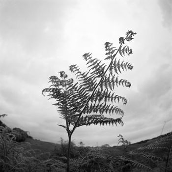 Film image of fern