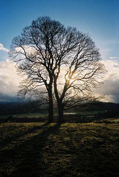 Lone tree on meadow