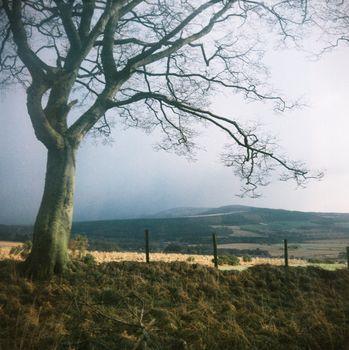 Lone tree in Aberdeenshire