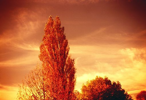Trees in redish color effect