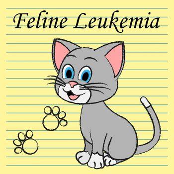 Feline Leukemia Meaning Bone Marrow And Kitten Cancer