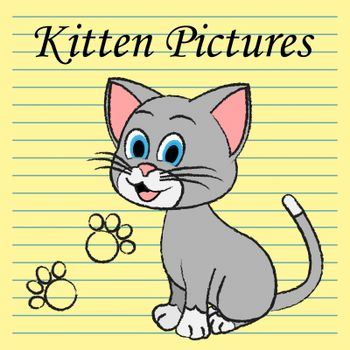 Kitten Pictures Showing Felines Pets And Cats