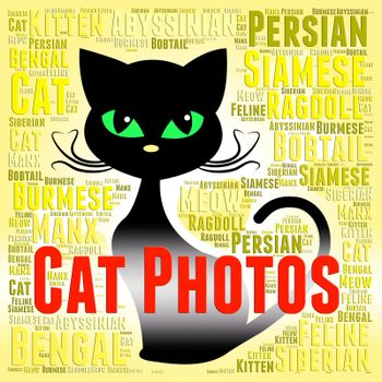 Cat Photos Meaning Feline Picture And Snapshots