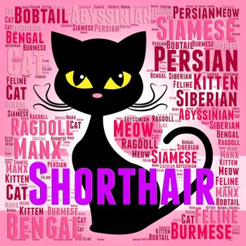 Shorthair Cat Meaning Feline Pet And Offspring