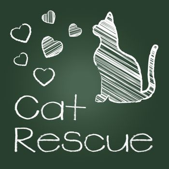 Cat Rescue Indicating Recovering Felines And Kittens