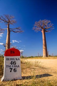 Road marker in the famous Avenida de Baobab near Morondava in Madagascar