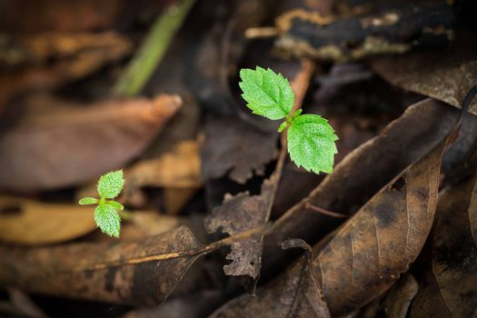 Close focus on small green trees growing from dirty ground which covered by rotting brown leaves as blurry and dark background