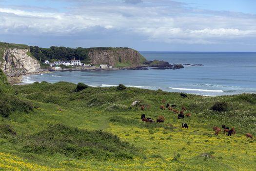 White Park Bay - Ballycastle - Northen Ireland