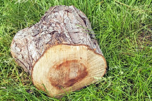 The stump of a sawn tree trunk.