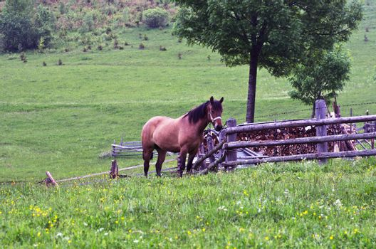 Senior horses eating grass in a meadow
