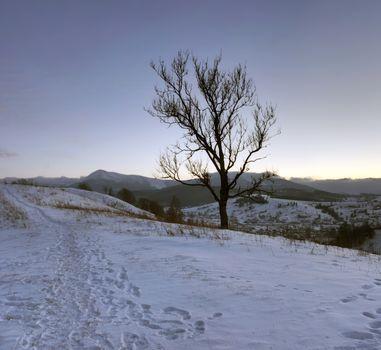 Sunrise in winter mountains . Sunrise in Carpathian Mountains, U
