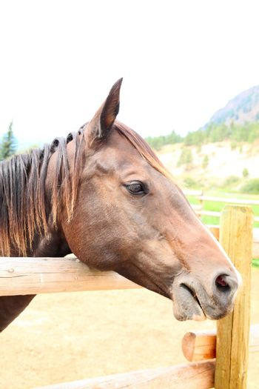Mixed quarter horse apaloosa on the ranch