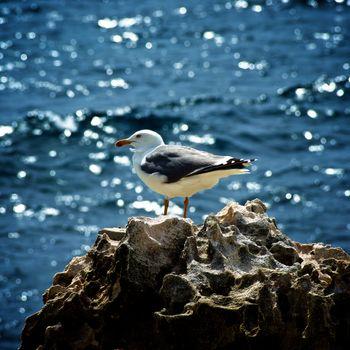 Seagull on Crag