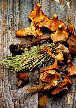 Arrangement of Dried Mushrooms