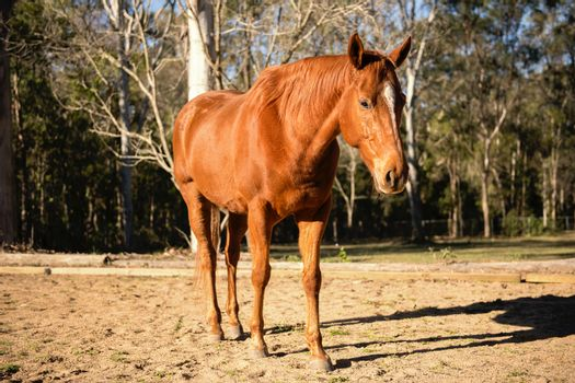 Horse in the paddock