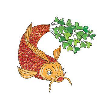 Koi Nishikigoi Carp Fish Microgreen Tail Drawing