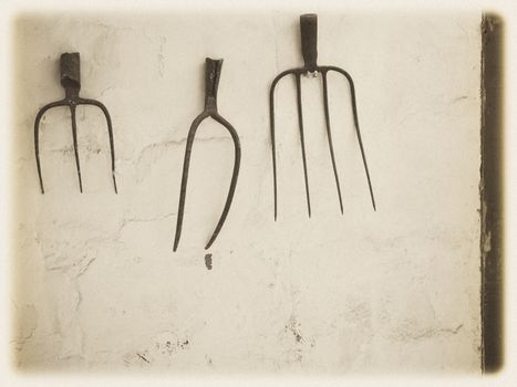 Rustic Pitchforks hanging on the wall of a barnyard on a farm in Fuerteventura, Spain