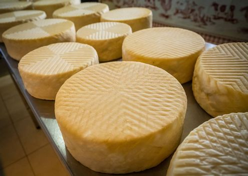 Large chunks of goat cheese on sale in a farm shop in Fuerteventura, Canary Islands, Spain