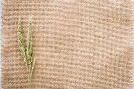 Grass on sackcloth