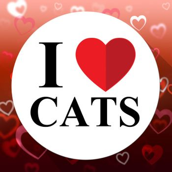 Love Cats Showing Kitty Superb And Agreeable Cat