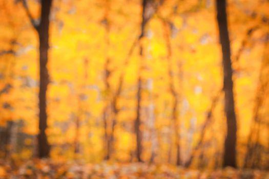 Autumn trees blurred