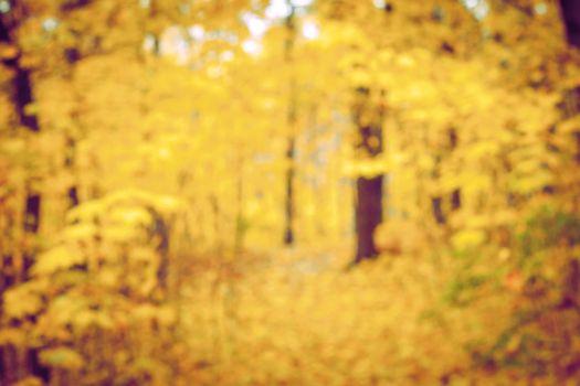 Autumn forest blurred