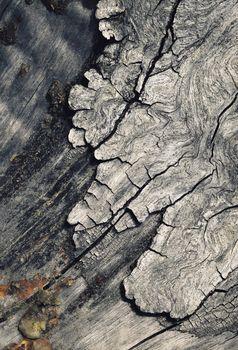 detail of the old degenerate bark