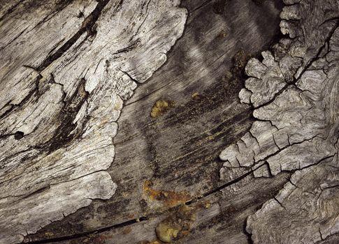 old degenerate bark
