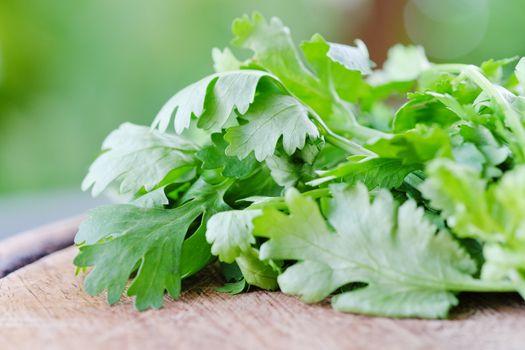 fresh coriander