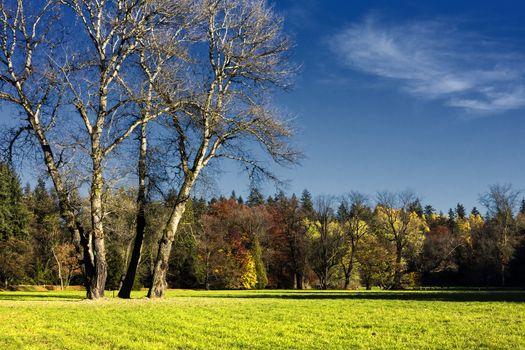 The hornbeam forest in falls morning