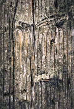 old gnarled spruce boards