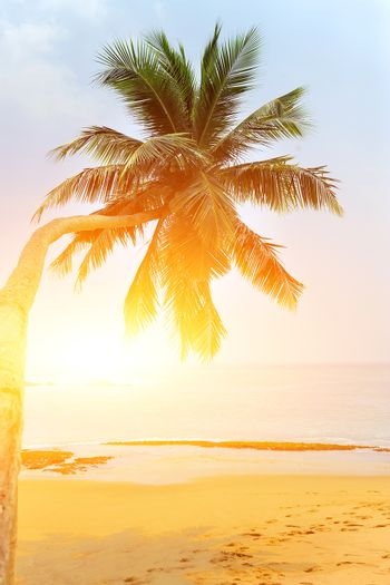 Tropical beach with palm on exotic island