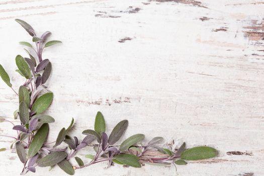 Sage herb background.
