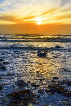 seaweed at rocky beal beach near ballybunion on the wild atlantic way ireland with a beautiful yellow sunset