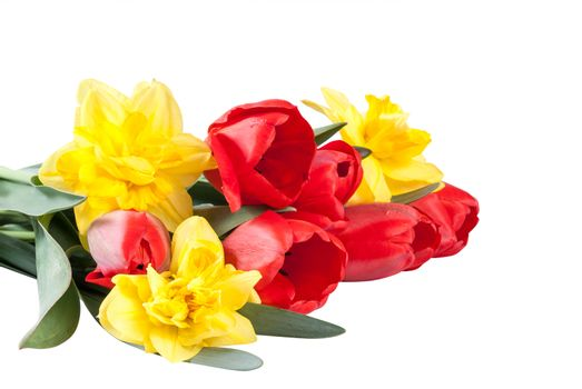 Bouquet of beautiful yellow narcissus and red tulips isolated on white background for your design