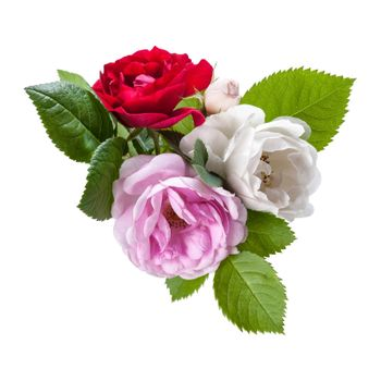 Red, white and pink rose flowers with leaves, isolated on white backround