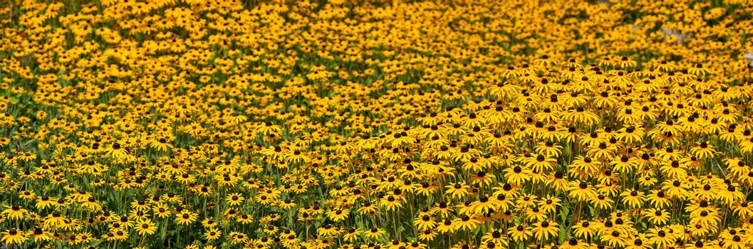 Spring landscape panorama with yellow flowers meadow in park