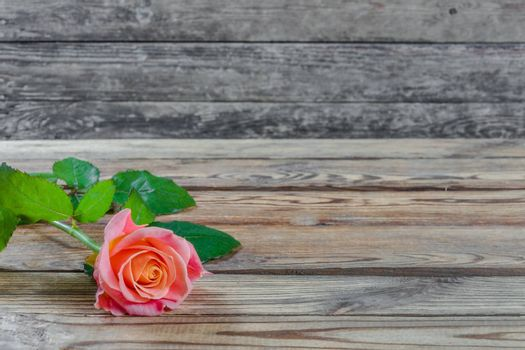 Beautiful pink rose flower on rustic table