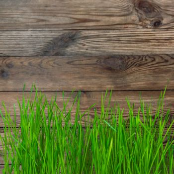 Rustic background with green grass