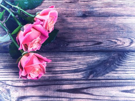 Vintage beautiful roses on wooden table, rustic style