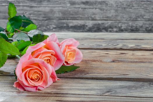 Roses flower on wooden rustic background