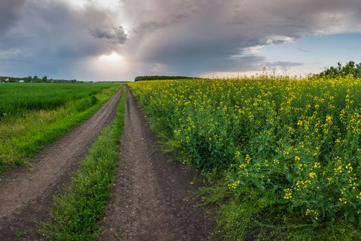 The road along the field of rapeseed