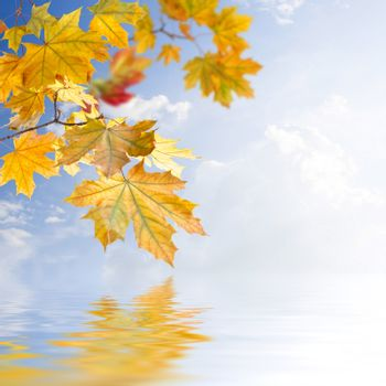 Bright autumn background with foliage