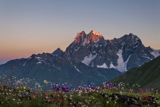 Flowery meadow and mountain Ushba at dawn