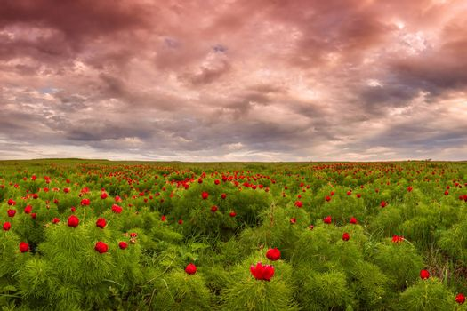 Wild steppe