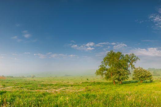 Morning summer meadow